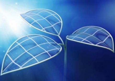 Frunza bionică, tehnologia care transformă lumina solară în combustibil lichid